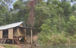 Người dân Quảng Trị lập lán giữ rừng