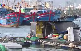 Nguy cơ ảnh hưởng luồng tàu vì nuôi trồng hải sản trái phép