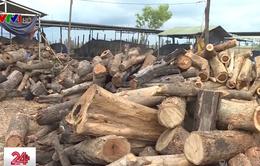 Phát hiện bãi tập kết gỗ rừng số lượng lớn tại Đăk Lăk