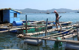 Kéo dài mâu thuẫn do nuôi thủy sản trong khu du lịch quốc gia vịnh Xuân Đài