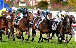 Hà Nội xây trường đua ngựa 500 triệu USD, người chơi được đặt cược