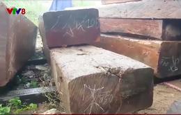 Truy quét xe chở gỗ trái phép ở Phú Yên
