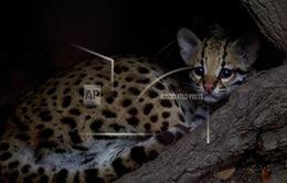Báo động đỏ về sự giảm sút số lượng động vật hoang dã