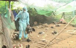 Hà Nội xuất hiện ổ dịch cúm gia cầm A/H5N6