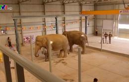 Bệnh viện dành cho voi tại Ấn Độ