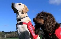 Phát hiện bệnh sốt rét nhờ những chú cún