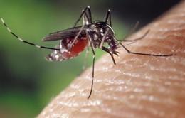Bệnh sốt rét quay trở lại ở 13 quốc gia