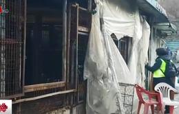 Hàn Quốc tiến hành phá bỏ cơ sở giết mổ chó lớn nhất đất nước