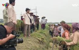 Gala Tôi là nông dân 2019: Lối đi ngay dưới chân mình
