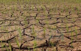 Nguy cơ thiếu nước phục vụ sản xuất nông nghiệp