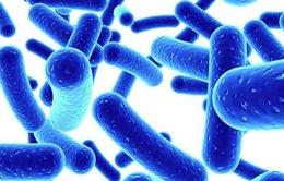 Lợi khuẩn giúp ích cho sự phát triển của xương
