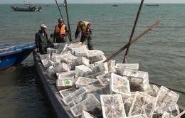 Bắt giữ vụ vận chuyển hơn 2.000 con chim bồ câu nhập lậu