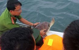 Kiên Giang: Thả 16 cá thể rùa biển quý hiếm