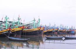 Cứu 5 ngư dân bị mắc kẹt trên ghe ở biển Vũng Tàu do bão số 9