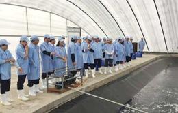 Đạt chuẩn an toàn dịch bệnh - Sự bứt phá của ngành tôm Việt