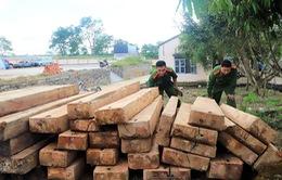 Lâm Đồng: Triệt phá nhóm lâm tặc khai thác gỗ trái phép