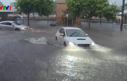 Mưa lớn gây hỗn loạn giao thông tại Sydney, Australia