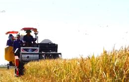Đầu tư cho nông nghiệp mới chỉ chiếm 5%