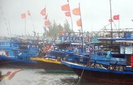 Quảng Nam: Sẽ nâng cấp khu neo đậu tránh trú bão tàu cá An Hòa