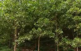 Ngành gỗ đáp ứng thị trường