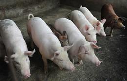 Đồng Nai chi hơn 17 tỷ đồng ứng phó bệnh dịch tả lợn châu Phi