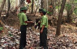 Để mất rừng, 17 cán bộ kiểm lâm ở Đắk Lắk bị kỷ luật