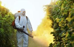 Pháp cấm vĩnh viễn loại thuốc trừ sâu chứa metam sodium do nguy cơ ngộ độc