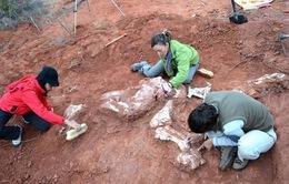 Phát hiện hóa thạch loài khủng long mới tại Argentina