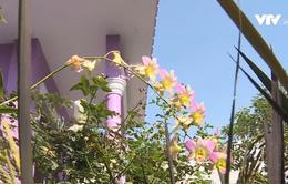 Ghé thăm vườn hoa độc sắc của người đàn ông yêu màu tím ở Đồng Tháp