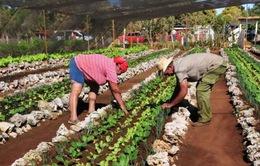 Mỹ và Cuba hợp tác nông nghiệp