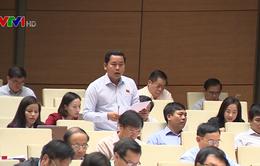 Đại biểu Quốc hội đề nghị bổ sung nguyên tắc để quản lý nghiêm ngặt hoạt động trồng trọt