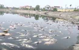 Cá chết bất thường nổi trắng hồ Cửa Nam, Nghệ An