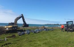 51 cá voi chết do mắc cạn tại New Zealand