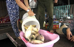Cá chết trên sông La Ngà