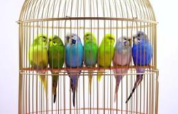 Điểm hẹn 10h: Chơi chim cảnh - Chơi mà ra tiền?