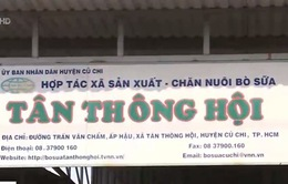 Hợp tác xã bò sữa Tân Thông Hội cam kết trả nợ xã viên