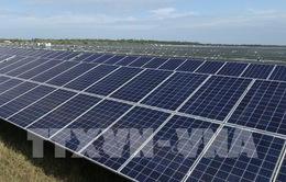 Dự án điện mặt trời đầu tiên ở Khánh Hòa sẽ đóng điện vào tháng 4/2019
