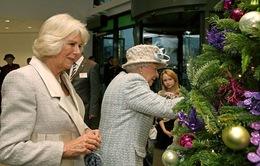 Hoàng gia Anh tổ chức Giáng sinh như thế nào?