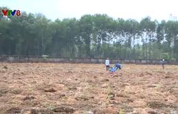 Thừa Thiên Huế: Trồng cây lâm nghiệp trái phép trên đất dự án