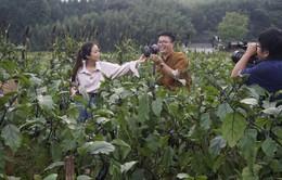 Xem lại trọn vẹn series Sắc màu Nhật Bản - Trải  nghiệm du lịch xanh trên VTV News