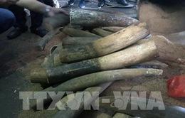 Truy tố đối tượng chế tác ngà voi với số lượng lớn