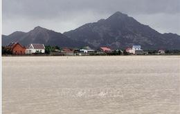 Ninh Thuận: Mưa lớn làm nhiều diện tích hoa màu ngập sâu trong nước