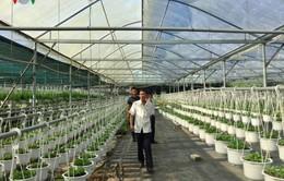 Tiếp tục cắt giảm thủ tục hành chính thu hút đầu tư nông nghiệp