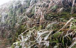 Các tỉnh miền Bắc ứng phó với rét đậm, rét hại