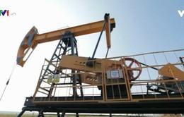 Phản ứng về quyết định rút khỏi OPEC của Qatar