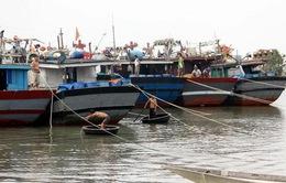Hơn 76,5 tỷ đồng hỗ trợ tàu cá đánh bắt xa bờ tỉnh Thừa Thiên Huế