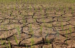 Đà Nẵng ứng phó với nhiễm mặn, hạn hán và Elnino