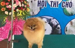 Hào hứng xem cuộc thi Hoa hậu chó ở miền Tây