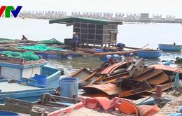 Chật vật phục hồi lồng bè nuôi thủy sản trên đảo Lý Sơn