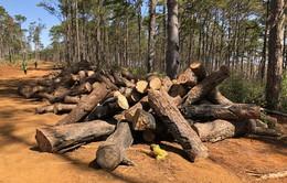 Vụ phá rừng cộng đồng ở Đắk Nông: Khởi tố, bắt tạm giam một đối tượng